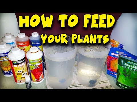 How To Feed Your Plants - Water, Nutrients & PH