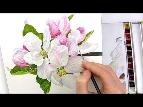 How to paint realistic apple blossom in watercolour with Anna Mason