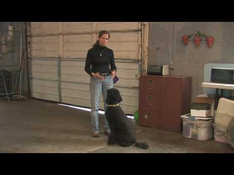 dog-training-:-how-to-train-dog-not-to-bite
