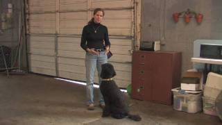 Dog Training : How To Train Dog Not To Bite