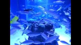 Un minuto de relajantes peces en acuario de tokio 7
