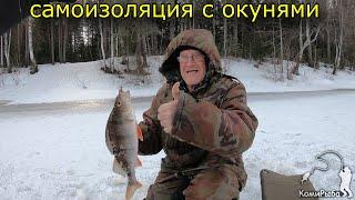Самоизоляция с окунями Зимняя рыбалка 2020 На собаке за окунем