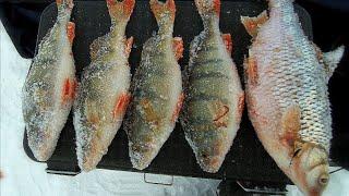 Весенние окуни на мормышку Рыбалка на алтайском озере