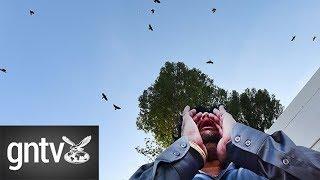 Meet the crow summoner