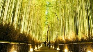 京都 嵐山花灯路2015