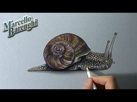 How To Draw A 3d Snail Youtube
