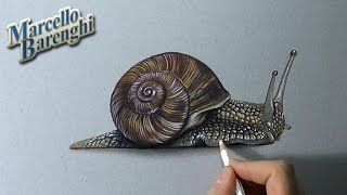 How to draw a 3D snail