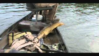 The Most Overlooked Cut-Bait for Catfish