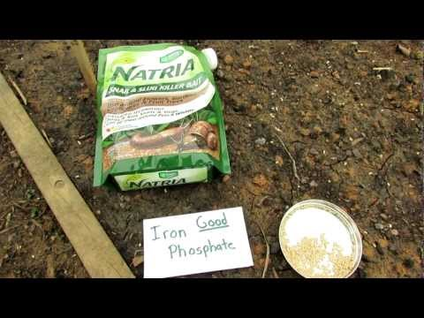 60 Seconds Or Sow: Killing Snails And Slugs With Iron Phosphate - The Rusted Garden 2013