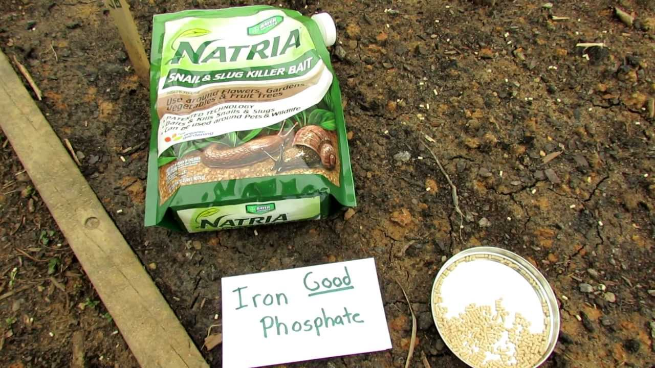 60 Seconds Or Sow Killing Snails And Slugs With Iron Phosphate The Rusted Garden 2013 Youtube