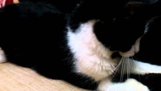 Что это, кот не понимает что творится