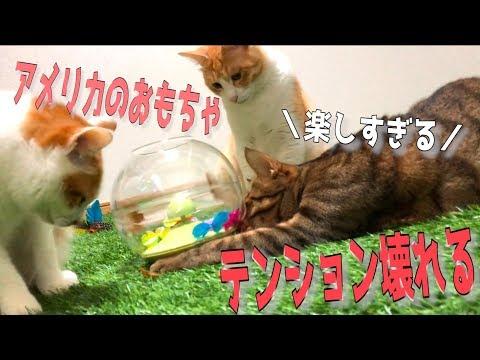 アメリカの謎のおもちゃに猫たちが大ハマり!テンションがおかしくなっちゃったwww