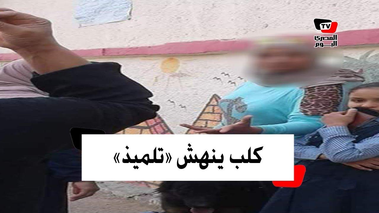 المصري اليوم:القصة الكاملة لكلب حراسة هاجم تلميذًا أمام مدرسته