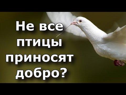 Не все птицы приносят добро. Если накакала птичка, важно знать какая.