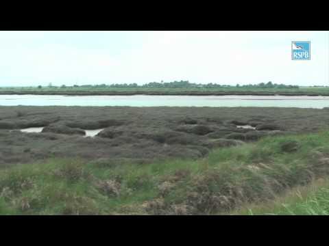 RSPB Wallasea Island