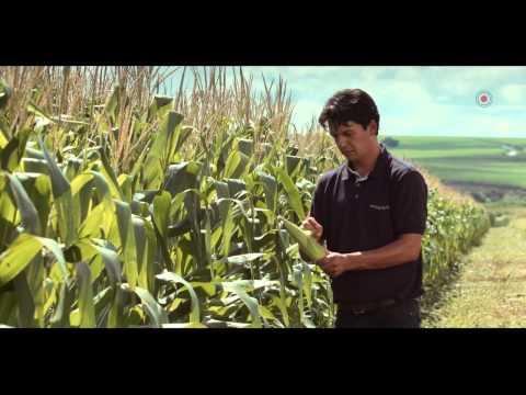 Penergetic - Por uma agricultura + inteligente HD