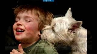 Пропала собака по кличке Люси mp4