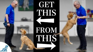 Teach Your Dog To Stop Jumping Up In 4 Simple Steps!