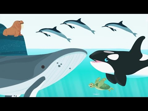 Thumbnail: Kids Learn About Ocean Animals Name And Sound - Baby Play Fun Games For Toddlers and Prechool