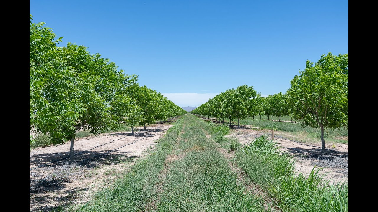 San Simon, AZ Orchard/Farm Land