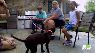 Yahtzee is a Winner in Her Forever Home | Pit Bulls and Parolees