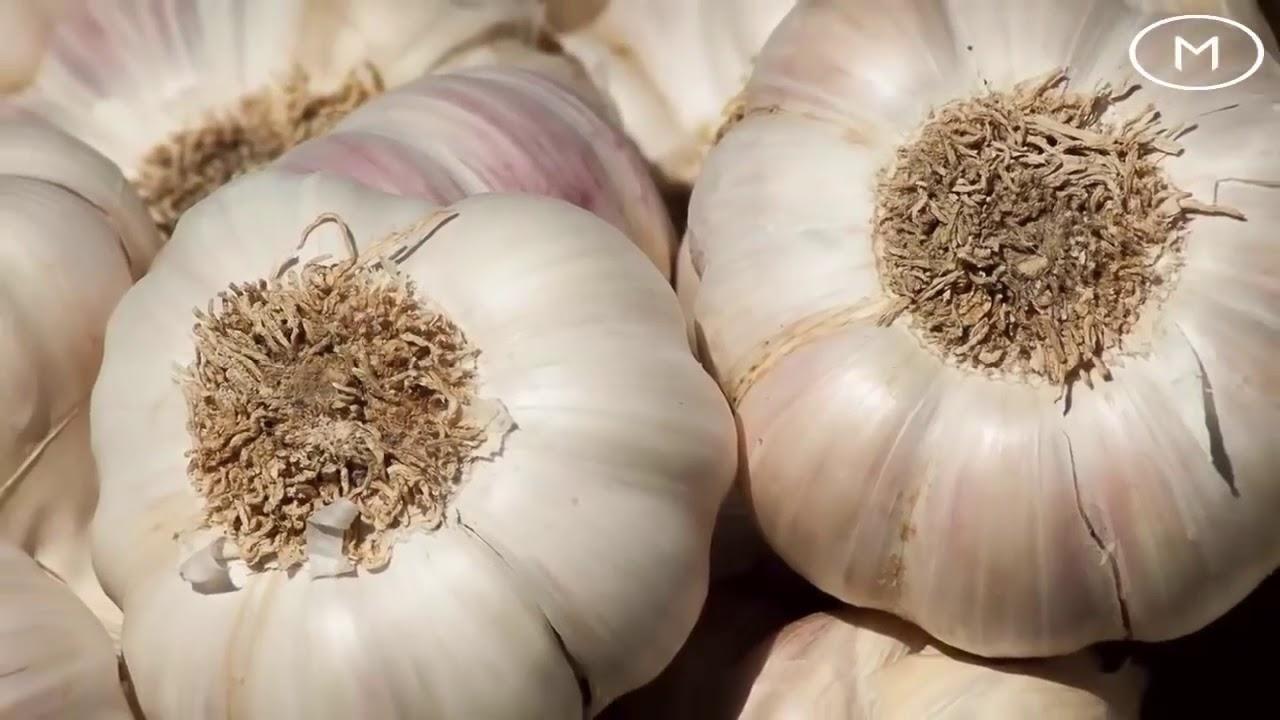 modul în care usturoiul îmbunătățește erecția