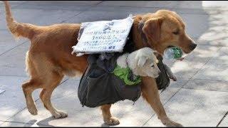 Chó mẹ địu con ra phố... bán khiến hàng triệu người rơi nước mắt!!