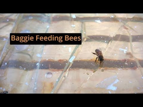 Baggie Feeding For Bees