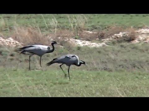 Королевство флоры и фауны - Видео онлайн