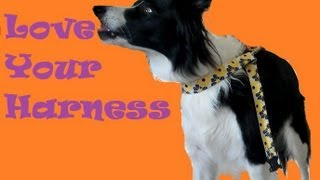 Harness Training- Teach Your Dog To Love Their Body Harness