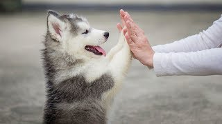 Cute is Not Enough - Funny Cats and Dogs Compilation #248