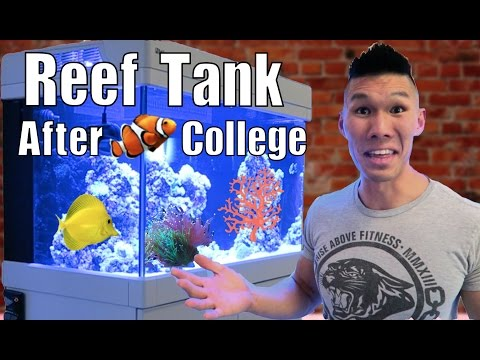 VlogAfterCollege's Red Sea Max Reef Tank! Q&A w/ CoralFish12g