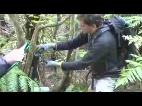 GVN New Zealand Nature Volunteer Program