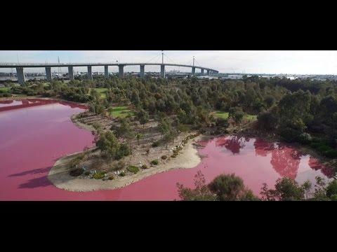 Lake turn Pink Westgate Park