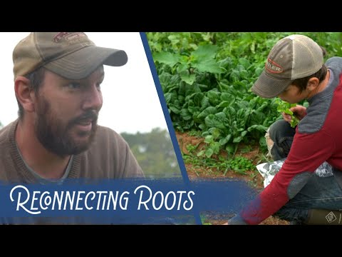 Reconnecting Roots: Lettuce Tell You About It