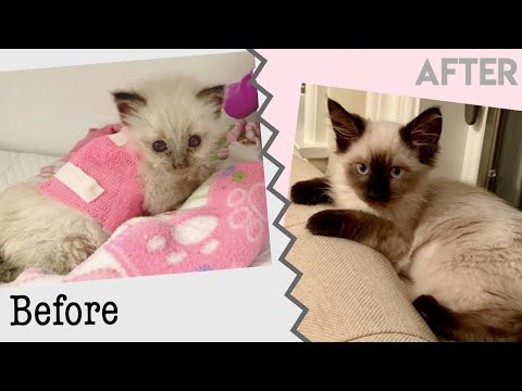 Rescue Animal Success Stories! | Amazing Dog and Cat Transformation
