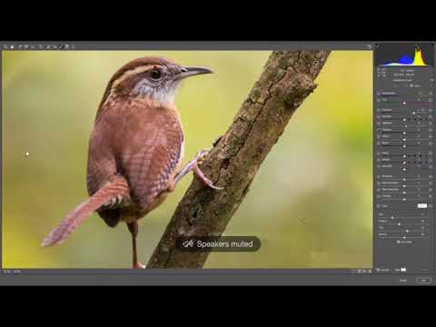 Facebook Live - Photo Editing for Wildlife 11/7/17