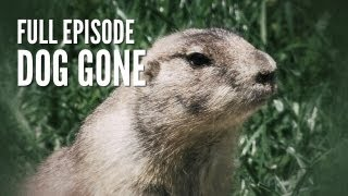Prairie Dog Hunt | Dog Gone