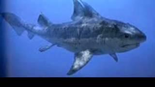 Die 10 ungewöhnlichsten Haie der Uhrzeit .