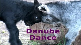 Danube Dance - Giggle with the Goats