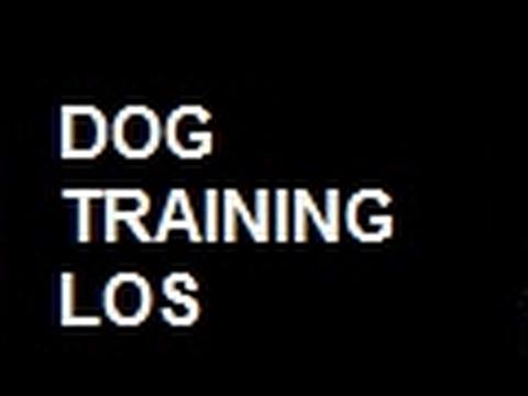 """*""Dog  Training  Los  Angeles"" - ""Los  Angeles  Dog  Training"" | ""Los  Angeles  Dog  Trainers""""*"""