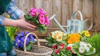 Jak wzmocnić rośliny przed chorobami ?