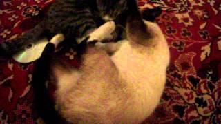 Бешенные кошки!!!