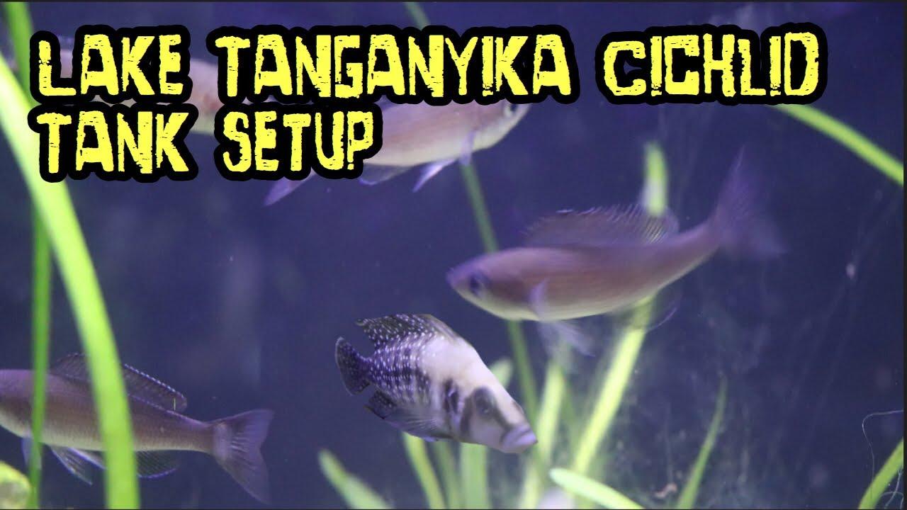 Lake Tanganyika Cichlid Tank Setup