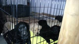 Day31 Beginning Crate Training