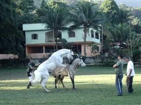 Как размножаются лошади видео