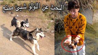اخذت كلبي بايكر ولوسي جولة استطلاعية في بساتين ديالى شوفو شصار بينة