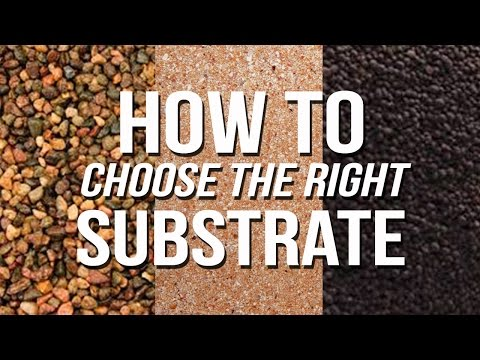 HOW TO: Choose An Aquarium Substrate