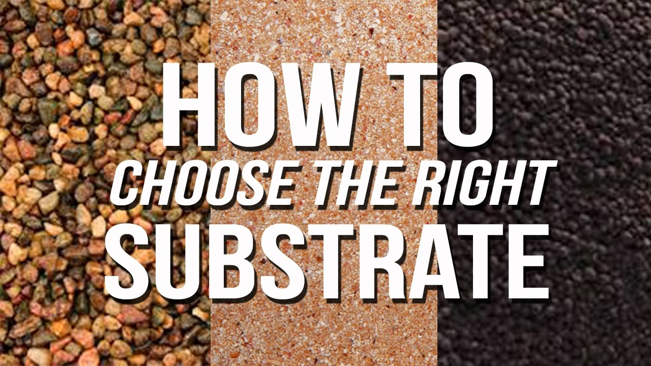 How to choose a substrate on the concrete floor under the laminate 98