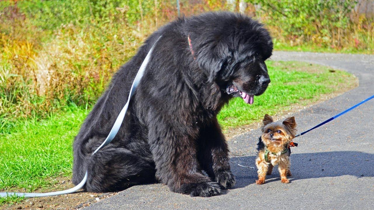 Породы Фото И Собак